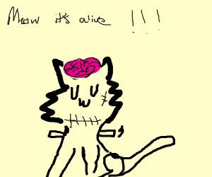 frankenstein cat