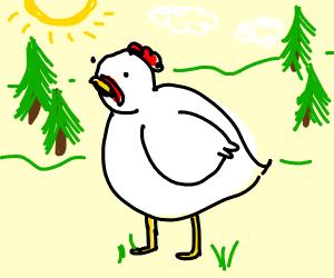 White Chicken standing around