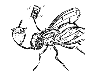 A fly purchasing strawberries from a store