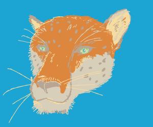 Leopard..