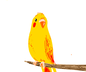 Yellow parakeet with red cheeks