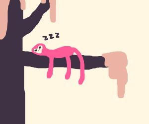Sleeping simian.