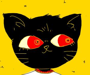 cute cat (kinda looks like Night Mind)