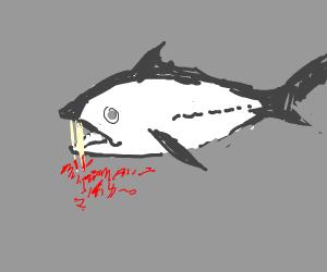 Dead vampire fish