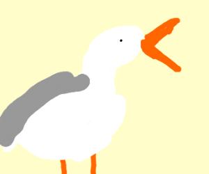 Mine Seagulls