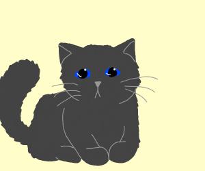Cute, Fluffy, Grey Kitten with blue eyes