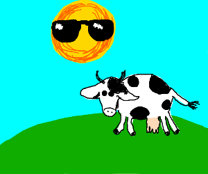 Cool sun chillin with a cow