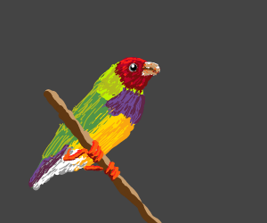 Colorful birb
