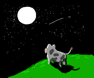 The cow looks up at the moon