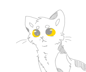Gray and white cat with yellow eyes