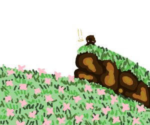 Hill overlooking large field of flowers
