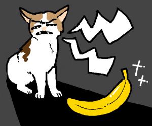 Cat hisses at banana