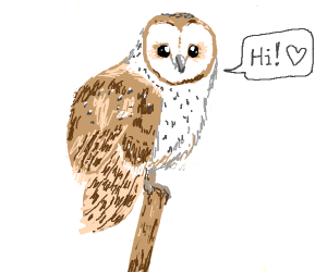 Owl says hi