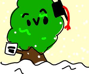 Tree graduated in winter