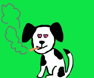 Dog hits a blunt