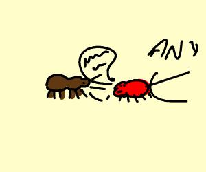ants talking