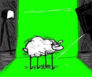 a sheep on a green screen