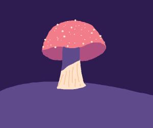 A pink mushroom in purple grass