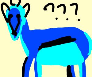 Blue antelope facing camera