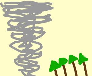 Tornado destroys trees