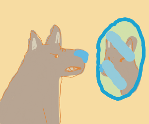 wolf growling at its face in the mirror