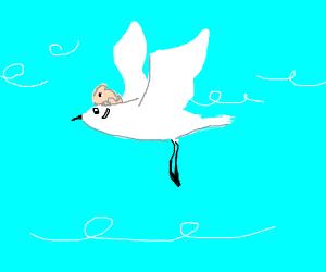 Rabbit + Seagull
