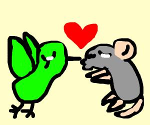 Hummingbird kissing Rat
