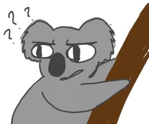 A confused koala