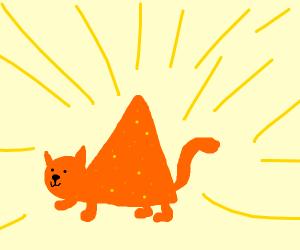 Dorito the cat