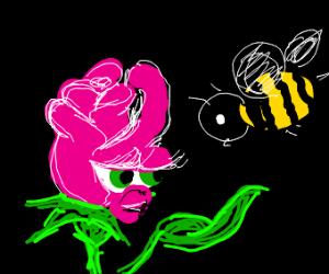 Rose coaxing bee