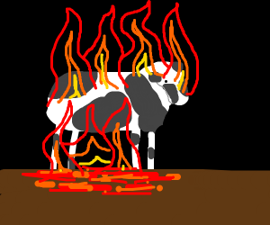 Torching a Cow
