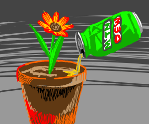 Watering a flower with mountain dew