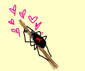Cute spider falls in love with a twig