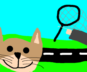 Catching a cat
