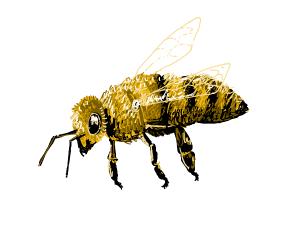 Yooch the Bee