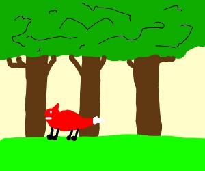fox walking in the woods
