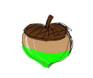 Acorn but half green