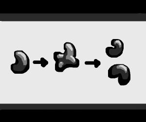 Bean mitosis