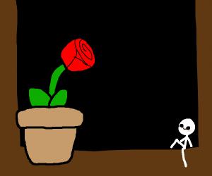rose planted on the windowsill