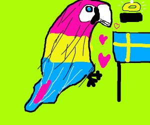 Macaw loves Sweden