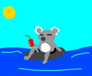 Koala relaxing on an inner tube
