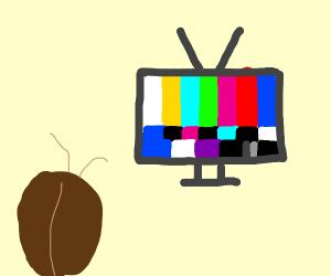 cockroaches TV ain't workin