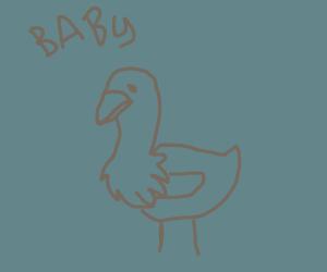 Baby Ostrich?