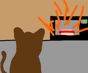 cat microwaves a hotdog but it explodes