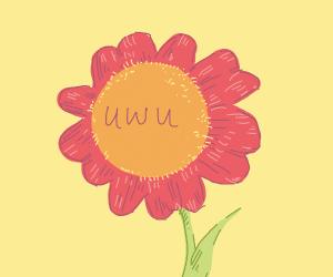 flower with an anime face