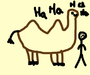 Camel being mean to a man