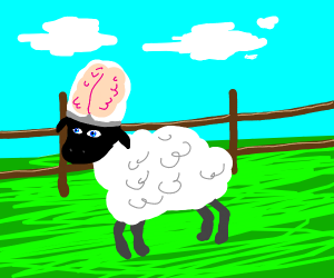 Brainy Sheep