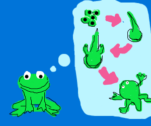 Frog thinks about its life cycle