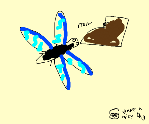 Dragonfly eating a Shoe