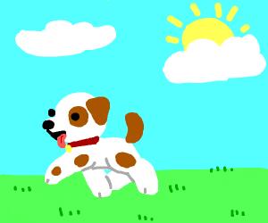 dog goes :D